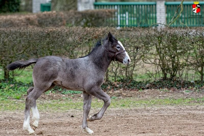 Etnica – a naming ceremony for this year's first born filly, 1 April