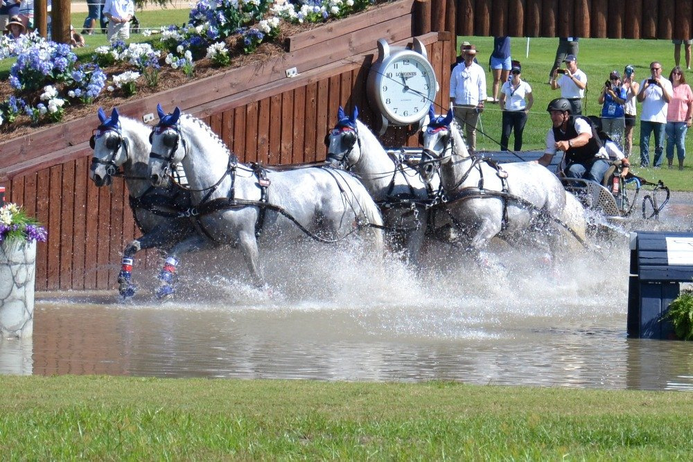 Kladruber horses at the FEI World Equestrian Games in the USA, September 2018