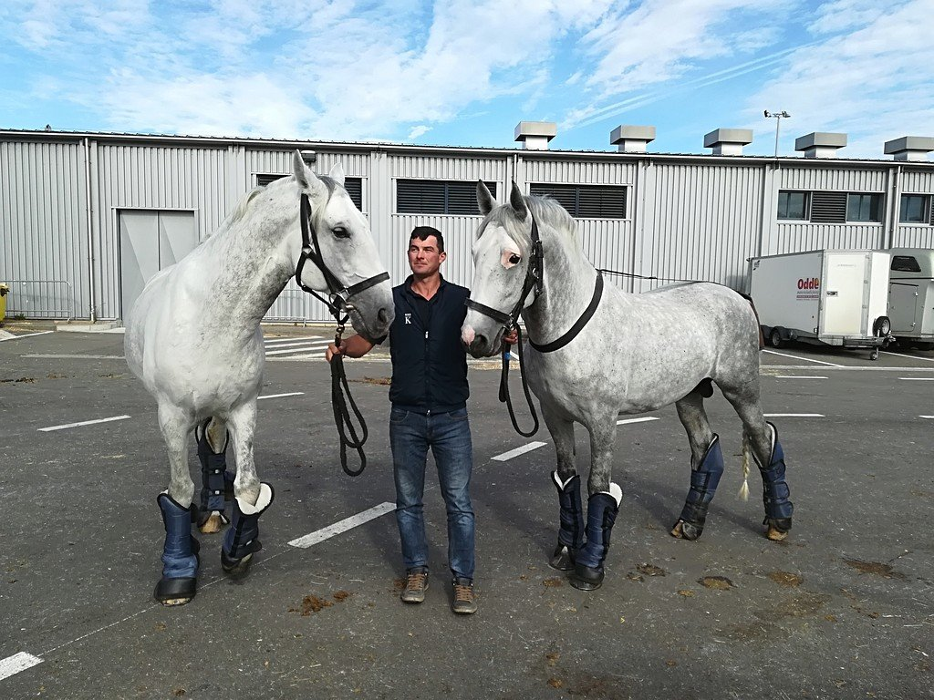 Kladruber horses travelling to the FEI World Equestrian Games in the USA, 10 September 2018