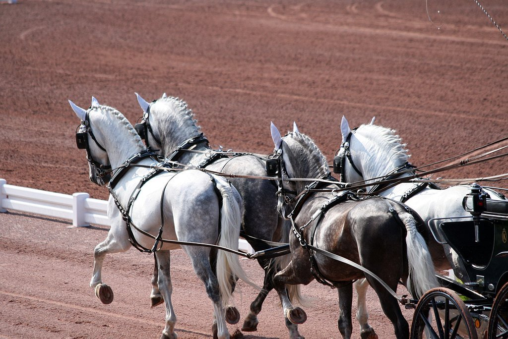 World Equestrian Games 2014 in Normandy – photo gallery I