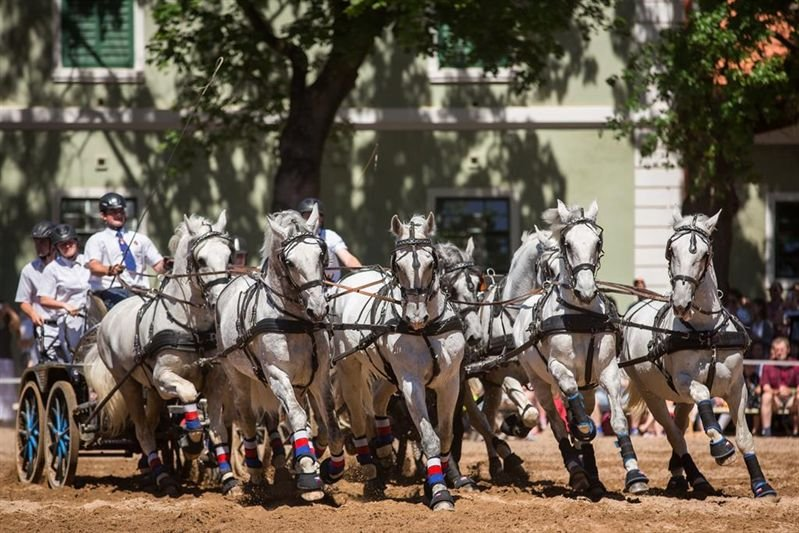 Kladruber Horse Day – Part I, 27 May 2017