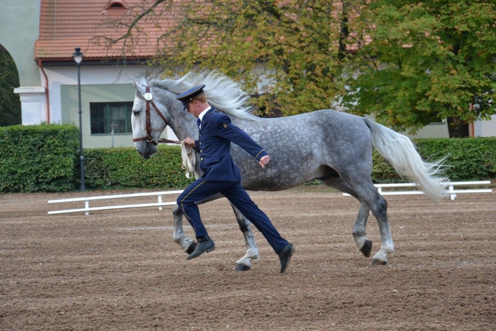 Kladruber horses' performance testing at the Kladruby nad Labem stud, 4–5 September 2018