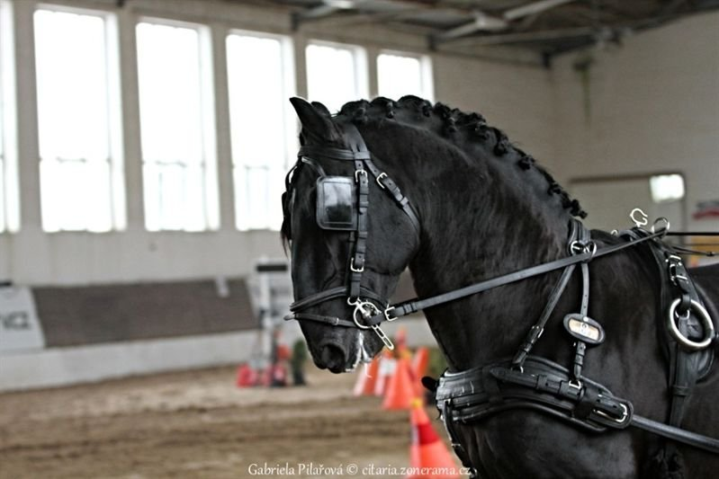 Indoor horse driving competition in Slatiňany, 10 February 2018