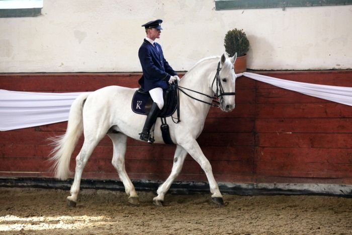 Spring studhorses show at the Písek stud, 3 March 2018