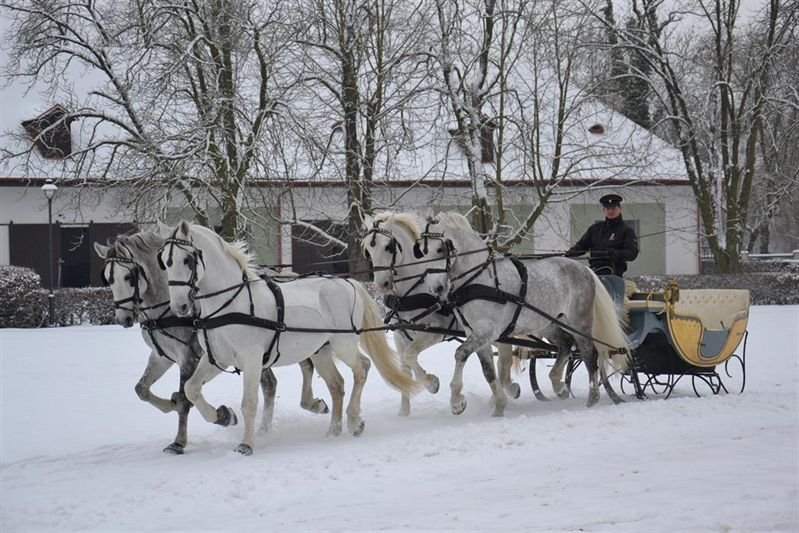 Horse drawn sleigh back in action after seven years, 1 February 2017