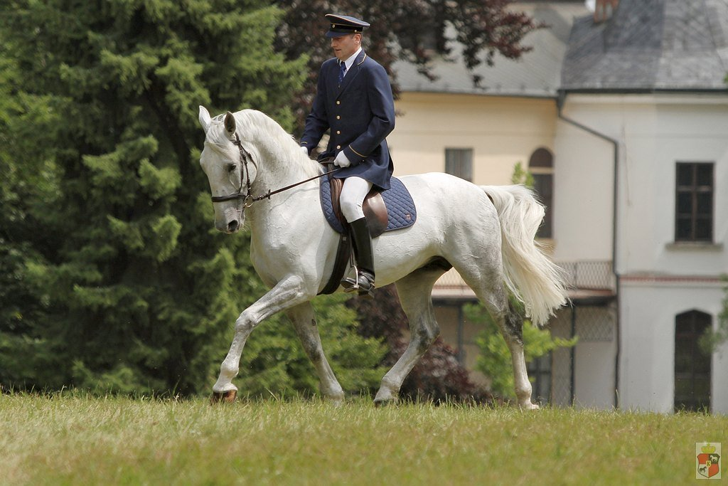 The Most Beautiful Horse of the Czech Republic Contest, Generale Pastorella VII – the finals