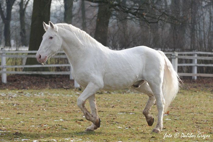 Remembering the stallion Sacramoso Eroica XLIII († 12 February 2016)