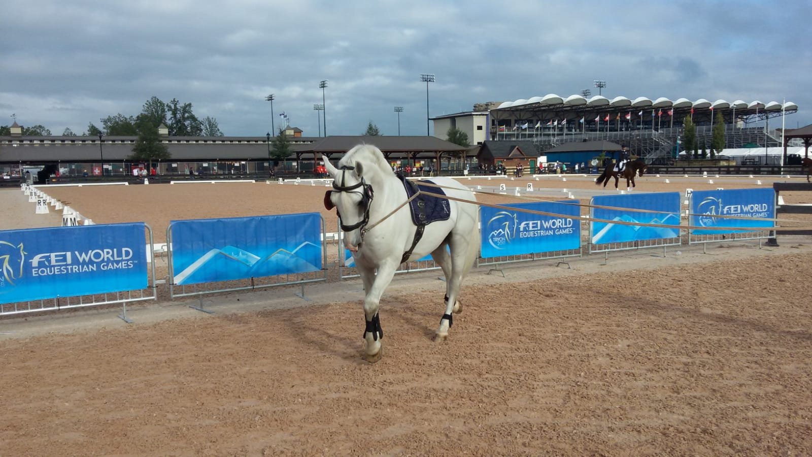 Kladruber horses at the centre of events at the FEI World Equestrian Games in the USA, 13 September 2018