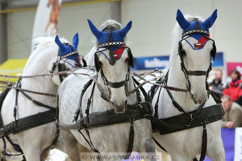 Horse driving festival in Lysá nad Labem, 26 March 2017