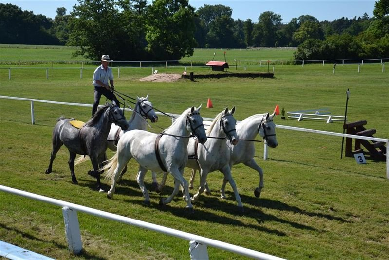 Training for the Equestrian Day, June 2016