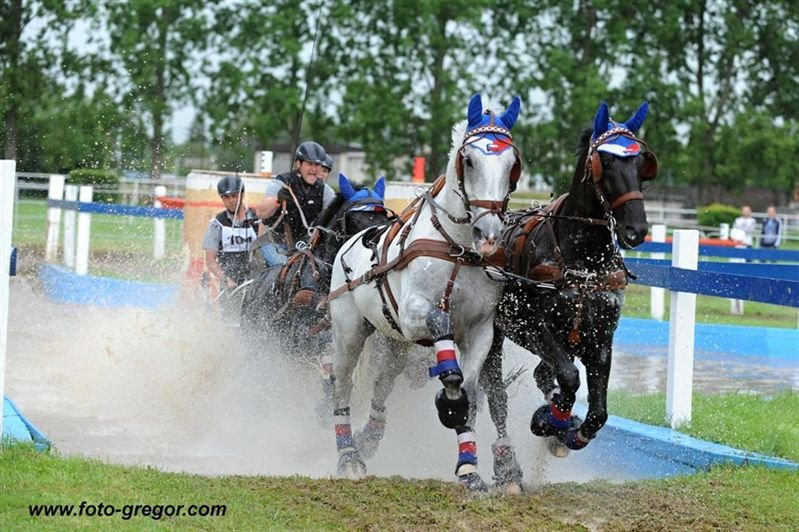 International horse driving competition in Topoľčianky, 2–5 June 2016