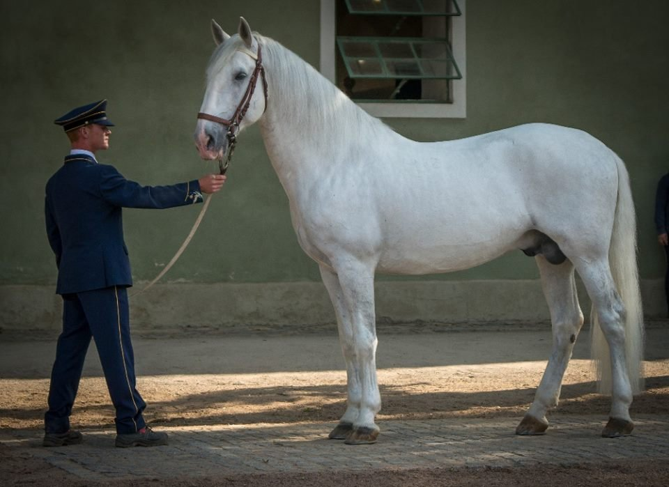 Spring sorting of Kladruber horses  in Kladruby n. L. and in Slatiňany, 10–11 May 2018