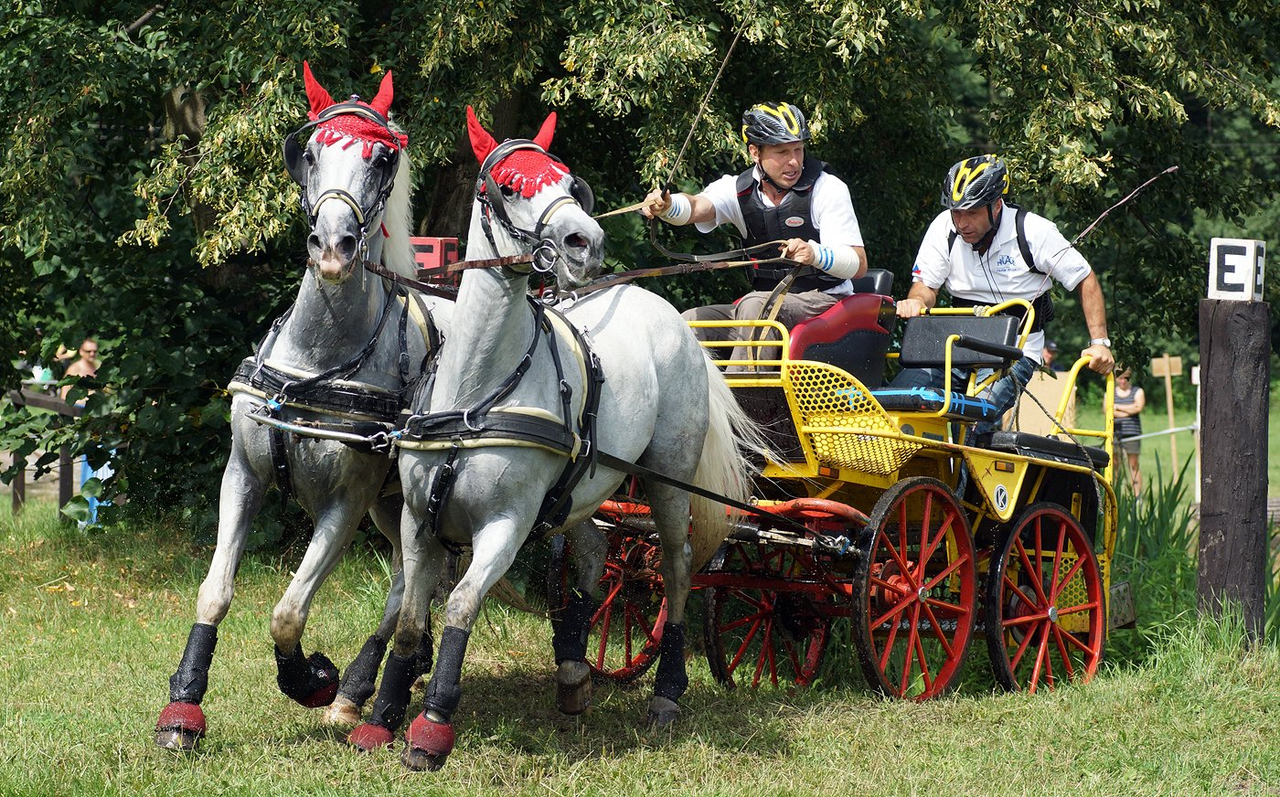 Czech Republic horse driving championship in Kladruby nad Labem, 3–5 August 2012