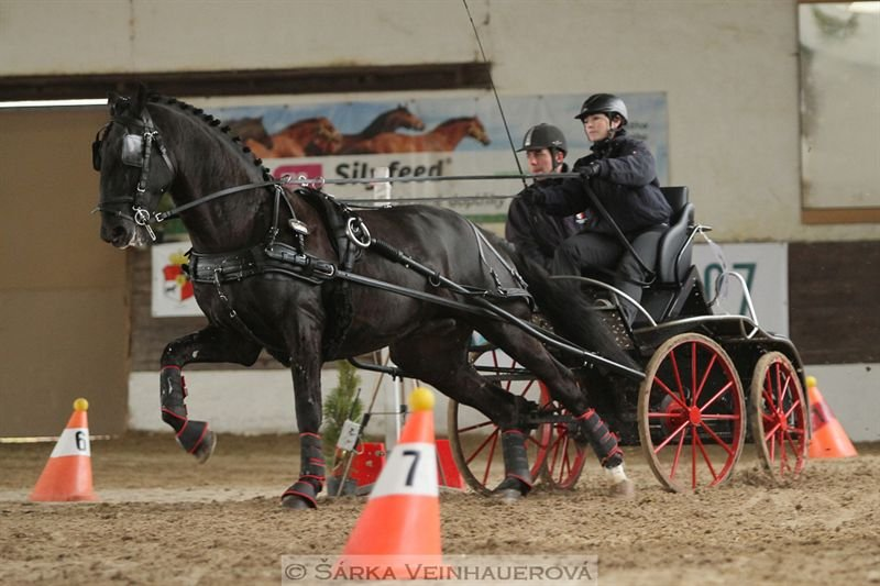 Indoor horse driving competition in Slatiňany, 13 February 2016