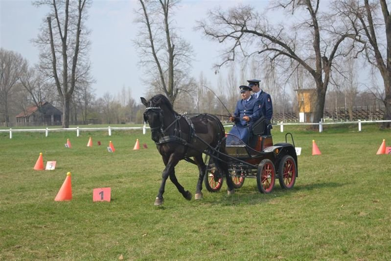 Exams in basic training for the horse driver, 2 April 2017