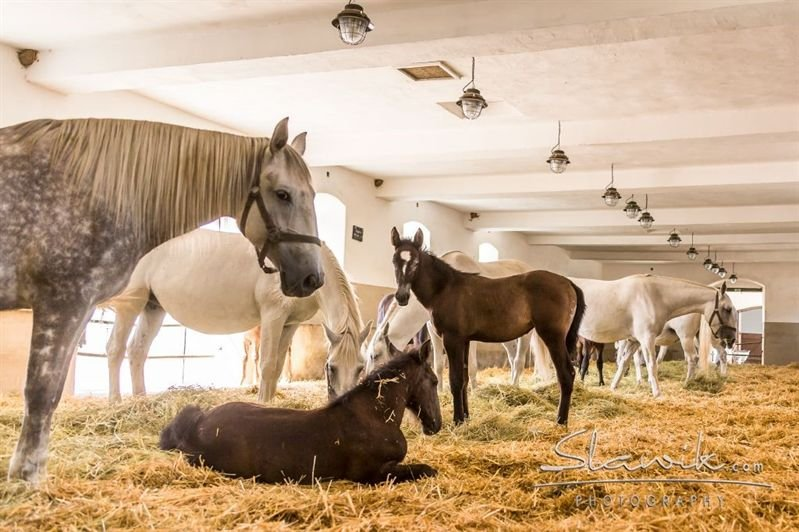 Moments from a foal's life